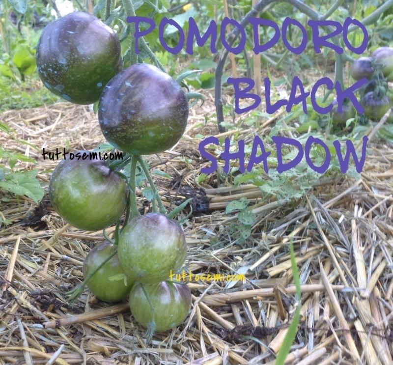 Il Tempo Ritrovato Il Grande Gatsby Un Meraviglioso: Pomodoro Black Shadow Semi [15]