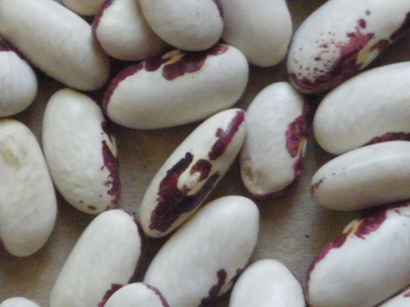 sostituire i fagioli bianchi per i fagioli blu