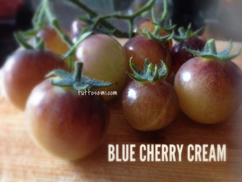 Pomodoro Blue Cherry Cream semi