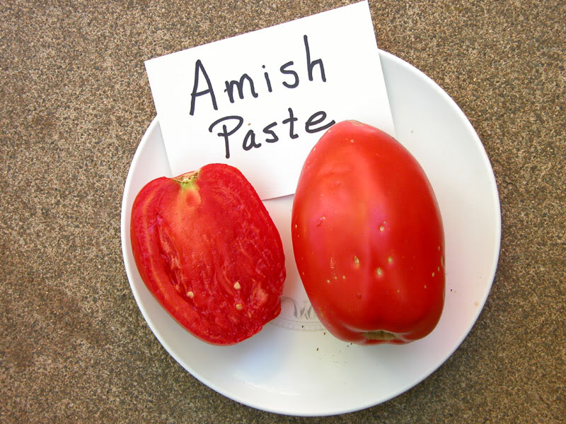 Pomodoro Amish Paste semi