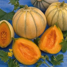 Semi rari frutta semi antichi frutta for Melone charentais