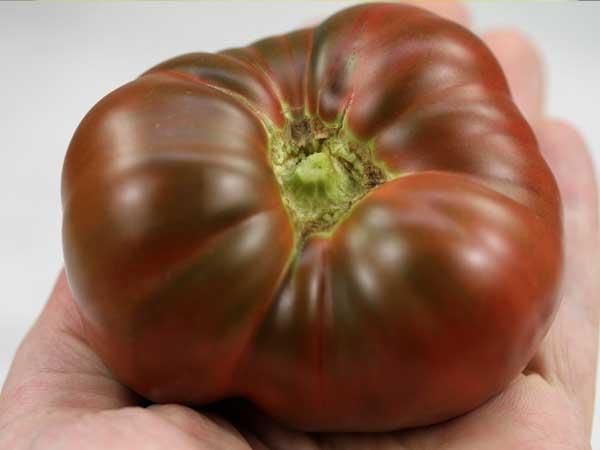 Bile Reflux and Tomato