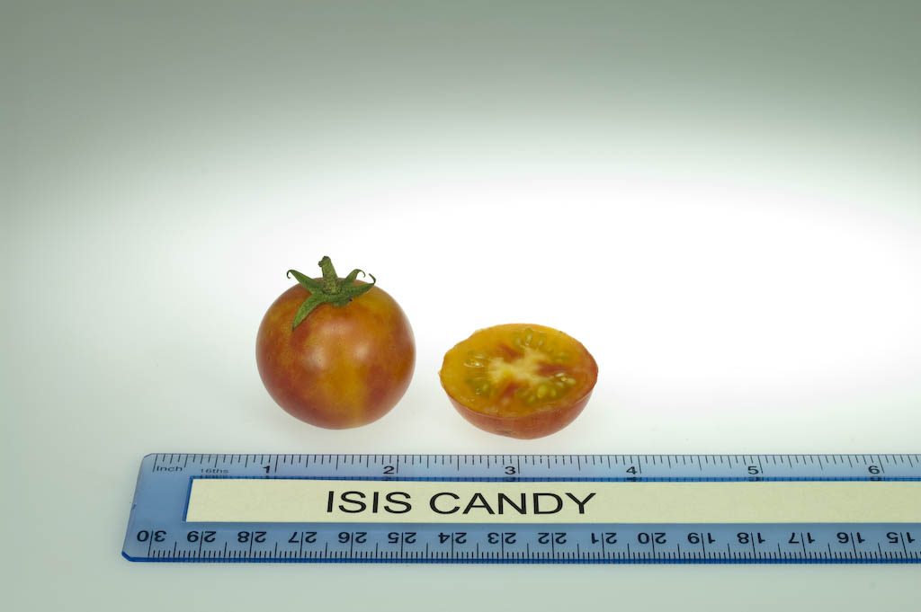 Pomodoro Isis Candy